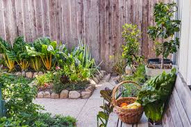 vegetable patch into a small garden