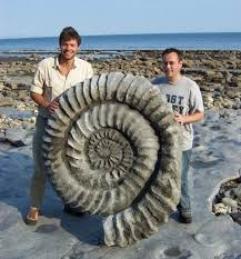 Giant Ammonite Fossil | Fossils, Prehistoric animals, Fossil