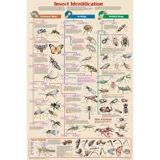 Insect Identification Chart Educational Classroom Poster