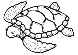 printable turtle coloring pages free for kids with teenage mutant ninja