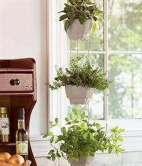 kitchen herb planter indoor herb