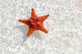 starfish facts for kids starfish orange in wavy shallow water