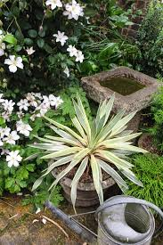 10 easy care evergreen pots for year