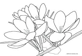 Spring Flower Coloring Pages For Toddlers Preschool Sheet Flowers