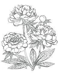 Coloring Page Flower Trustbanksurinamecom
