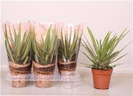 horticash grossiste en plantes fournitures et accessoires de