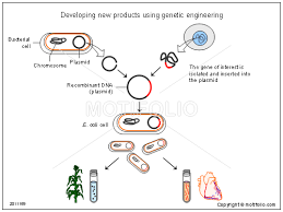 developing new products using genetic engineering ppt powerpoint developing new products using genetic engineering ppt powerpoint drawing diagrams templates images