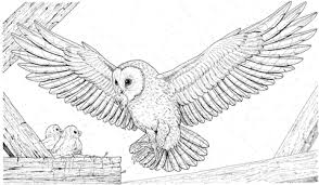 Barn Owl Brings A Prey For Its Babies Coloring Page Free Printable