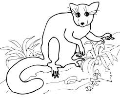 Maki Uit Madagascar Kleurplaat Gratis Kleurplaten Printen