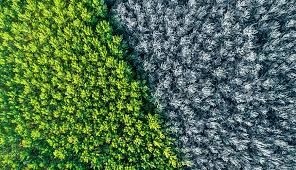How Does Climate Change Affect the Seasons? | SmartEnergy