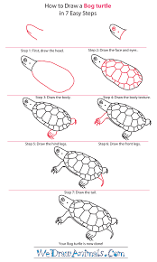 Small Picture How to Draw a Bog Turtle