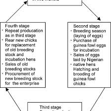 Poultry Incubation Chart A Flow Chart Showing The Stages Of Operation In The