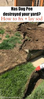 Diy Sod Laying Sod Digging Up Dog Pee Four Generations One Roof