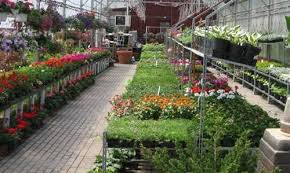 garden centers rochester ny. Tucked Away Like A Hidden Jewel In The Town Of Brighton, Clover Nursery \u0026 Garden Center Contains Four Acres Hand Selected Growth. Centers Rochester Ny