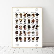 dog chart us 7 9 the dog different dog breeds infographic chart art canvas poster prints home wall decor painting 24x36 inches in painting calligraphy from