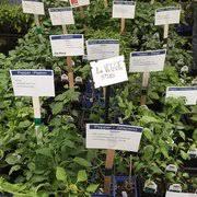 denver garden centers. Photo Of City Floral Garden Center - Denver, CO, United States. Denver Centers