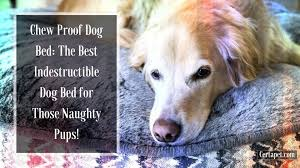 chew proof dog bed the best indestructible dog bed for those pups