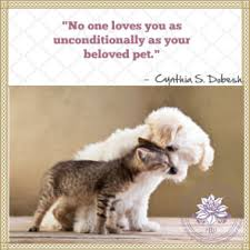 Loss Of A Pet Quote Loss of Pet Quotes 47
