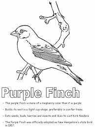 Small Picture Purple Finch coloring page