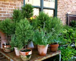 Growing Moss on Terracotta