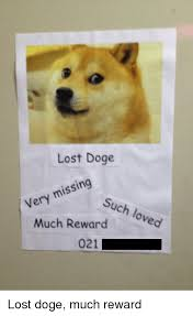 lost doge. Beautiful Doge Doge Lost And Such Lost Doge Missing Very Such Loved Much Reward 021 With E