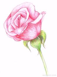 Small Picture 25 Beautiful Rose Drawings and Paintings for your inspiration