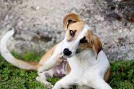 Flea Tick Prevention Comparison Chart Flea Treatment And Prevention Medications For Dogs
