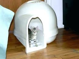 image covered cat litter. Covered Kitty Litter Box Biggest For Cats Big Dome Cat Hooded Intended Inspirations . Image