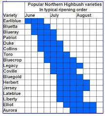 Blueberry Ripening Chart Blueberry Varieties Characteristics Ripening Order And More