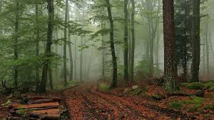 nature images foggy forest