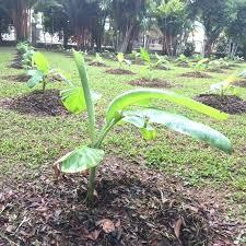 best garden fertilizer. Perfect Fertilizer Best Vegetable Garden Fertilizer Medium Size Of Organic For  Vegetables Throughout Best Garden Fertilizer I