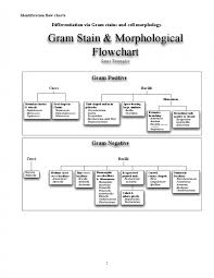 Microbiology Unknown Test Flow Chart 56 Scientific Bacillus Flowchart