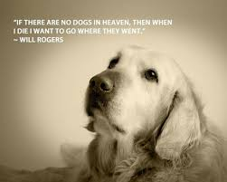 Funny Dog Quotes Beauteous 48 Funny Dog Quotes SpartaDog Blog