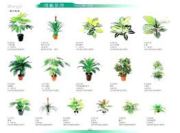 indoor house plants names tropical identification lily types diffe kinds of architectures wonderful ind