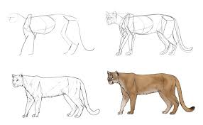 lioness hunting drawing. Perfect Drawing Howtodrawbigcatsprocessmountainlion For Lioness Hunting Drawing