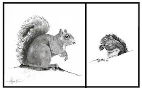 Grey Squirrel Age Chart The Sociable Gray Squirrel The Outside Story