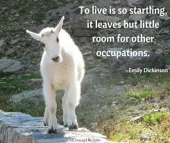 Goat Quotes Amazing Quotes Page 48 Chrysalis Wellness LLC