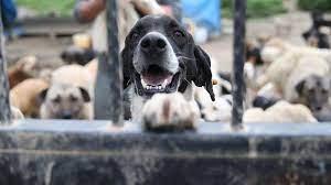 Hayvanları Koruma Kanunu çıktı mı, kabul edildi mi? Hayvanları Koruma  Kanunu yönetmeliği - maddeleri 2021 nelerdir? - Son Dakika Haberleri  Milliyet