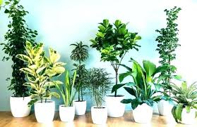 small plants for office. Perfect Small Plants For Office