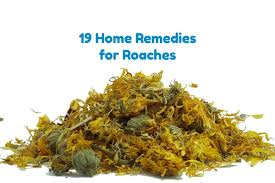Home Remedies For Roaches Kill Them Fast Naturally