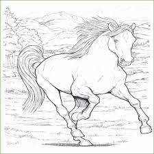 4 Paard Kleurplaten 65904 Kayra Examples For Hoe Teken Je Een