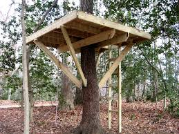 basic tree house pictures. Tree House Platform Basic Pictures P