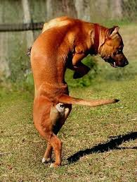 cat throwing up bile cat and dog