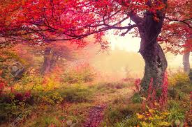 Image result for october photos free