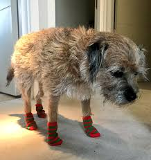 Kate lawler attempts to break the record for the most amount of squats done in 30 seconds with a dog on her back. Kate Lawler On Twitter If You Re Sad That Iainlee Wasn T In The Final Two Here S My Dog Looking Really Happy In Some Festive Socks Imacelebfinal Https T Co Iez7kwsaxb