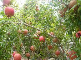 Best 25 Miniature Fruit Trees Ideas On Pinterest  Dwarf Fruit Non Gmo Fruit Trees For Sale