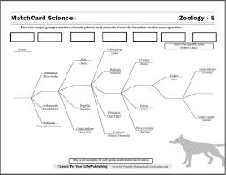 Dog Scientific Classification Chart Scientific Classification Worksheet Animal Classification