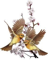 """Résultat de recherche d'images pour """"gif oiseau"""""""