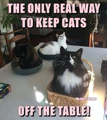 how to keep cat off table how to keep your cat off table anti cat tablecloth