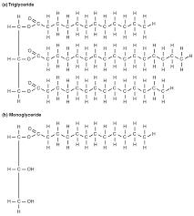 24 3 lipid metabolism anatomy